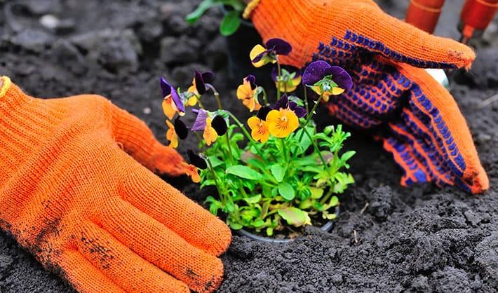 Curso de jardinería formacion