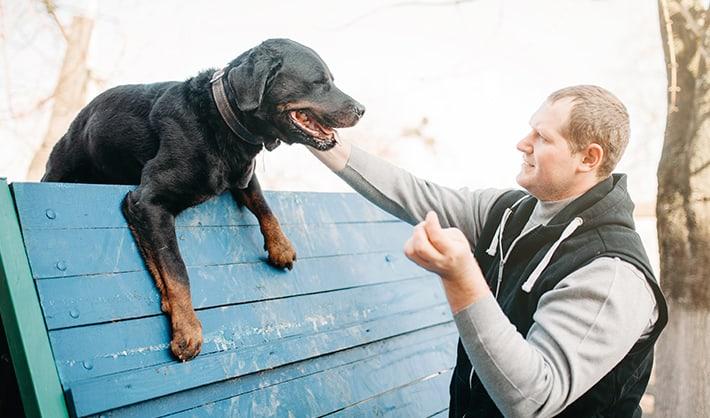 Curso de adiestrador de perros