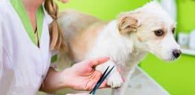 Trabajo en peluquería canina